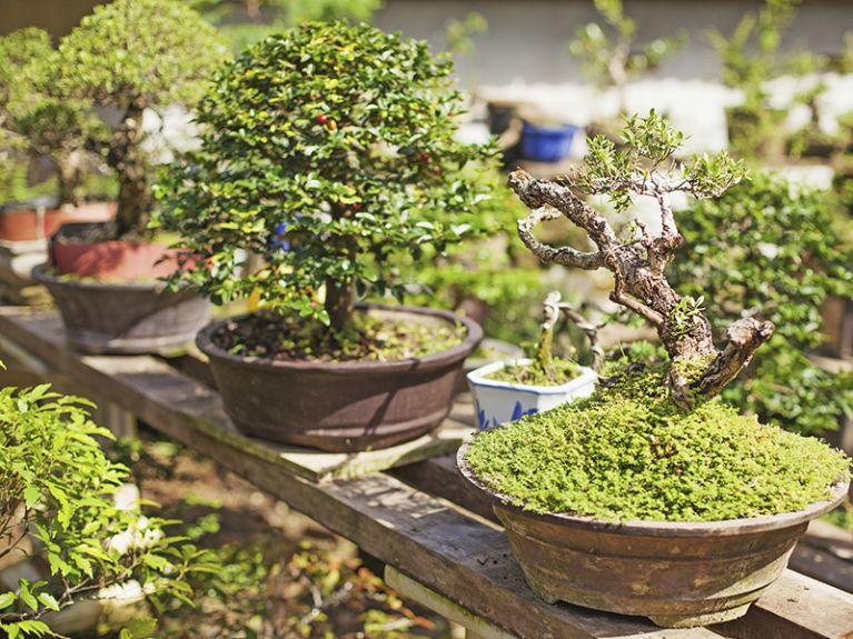 coltivazione del verde